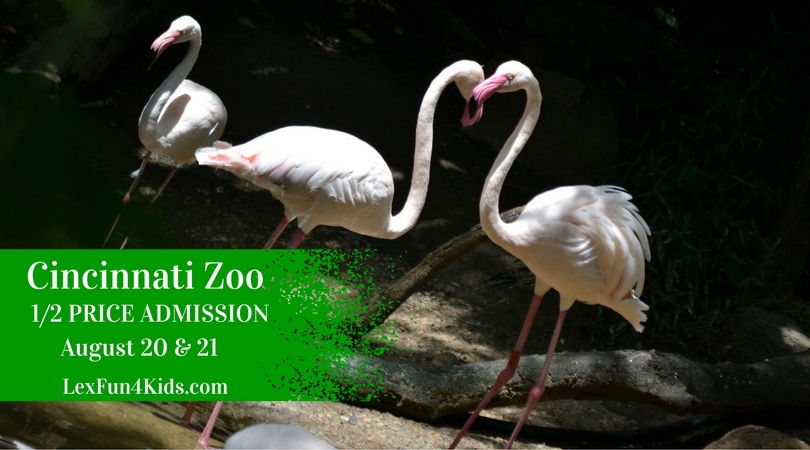 zoo half (1)