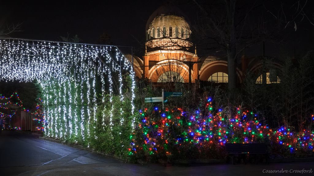 Cincinnati zoo festival of lights 2017 lexfun4kids - Dayton home and garden show 2017 ...
