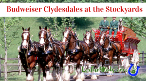 Clydesdales Stockyards