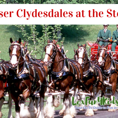 Bluegrass Stockyards Beef BBQ Festival - See the Clydesdales